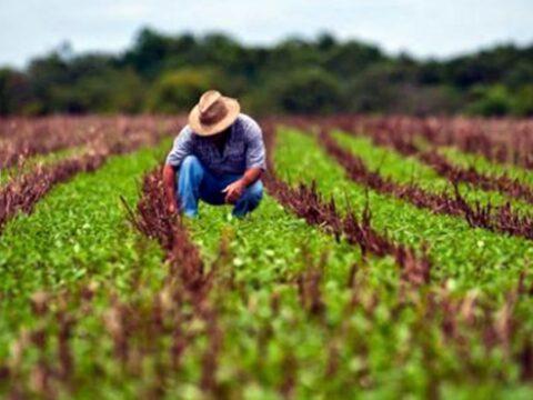 Producción de Alimentos, prioridad mayor en la agricultura cubana.