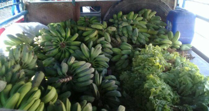 Contribución de los campesinos santiagueros a la alimentación del pueblo santiaguero