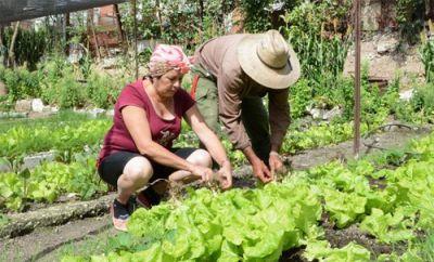 Agricultura urbana, subusrbana y familiar