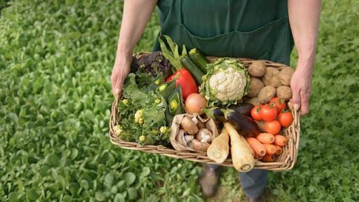 Producción y diversificación de alimentos en prioridad en la provincia Santiago de Cuba