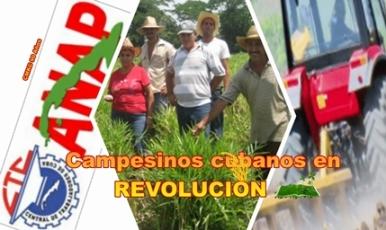 Campesinos santiagueros en la producción de alimentos para el pueblo.