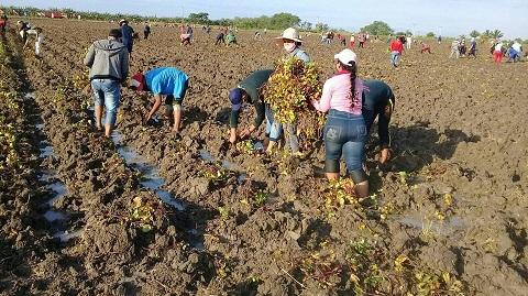 Priorizan campesinos la producción de alimentos en la provincia Santiago de Cuba.