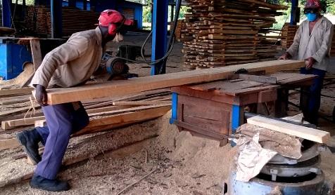 Trabajadores forestales en el uso controlado de los recursos naturales de la Sierra Maestra.