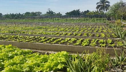 Agricultura en el municipio Guamá de Santiago de Cuba.