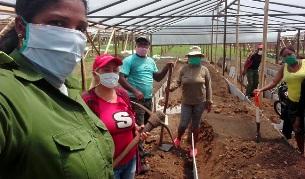 Se movilizan santiagueros para la agricultura en Sabana Ingenio, en El Caney.