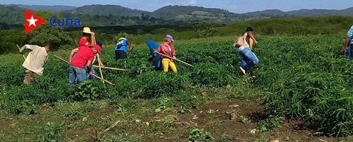 Inician en el municipio Tercer Frente movilizaciones agrícolas. Foto: Javier Labrada.