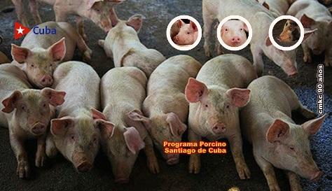 Mejor visión empresarial: clave para el programa porcino