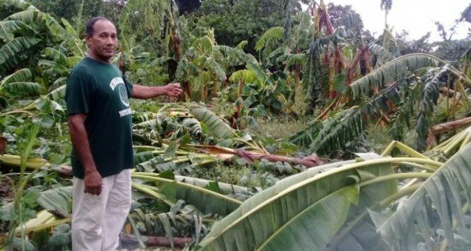 Afectaciones que dejó en la agricultura el paso de la tormenta Laura