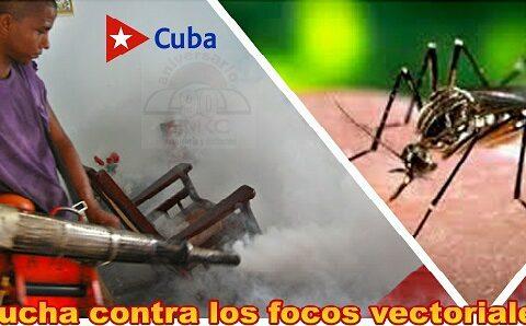 Lucha contra los focos del mosquito aedes aegypti en Santiago de Cuba.