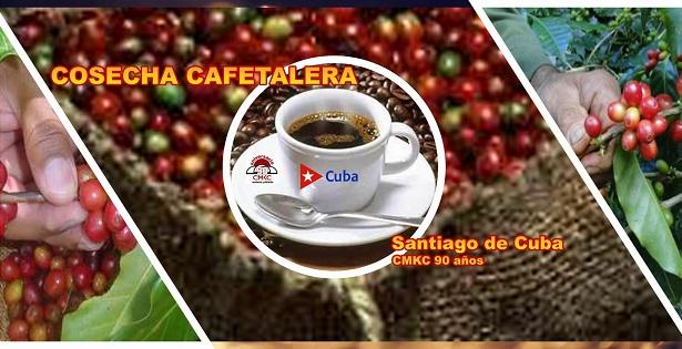 Cosecha cafetalera en la provincia Santiago de Cuba. Renglón exportable. Imagen: Santiago Romero Chang