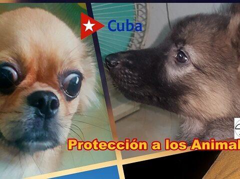 Cuba aprueba decreto ley de bienestar animal