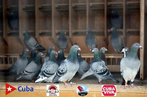Asociación Nacional Ornitológica de Cuba (ANOC)