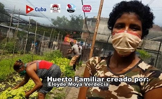 Lo que puede una familia santiaguera con un simple huerto urbano