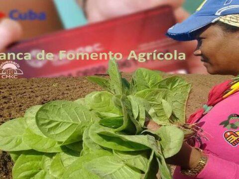 Banca para el fomento agrícola en la provincia Santiago de Cuba. Portada: Santiago Romero Chang