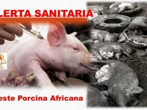 Cuba emite Alerta sanitaria por brote de la peste porcina africana en República Dominicana
