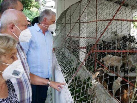 Granja en producción Nazareno, ubicada en el municipio de San José de las Lajas, en la provincia de Mayabeque